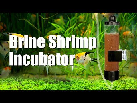 Easy Hatch Baby Brine Shrimp Set Up   Brine Shrimp Incubator - From Senzeal.com