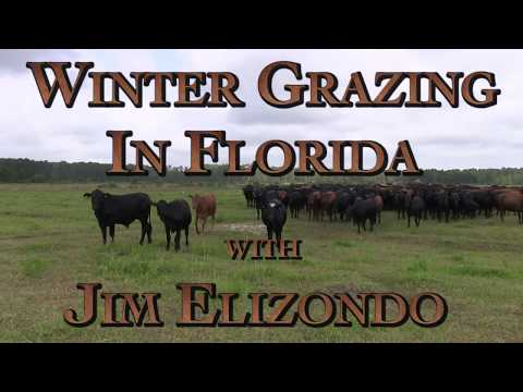 Winter Grazing in Florida with Jim Elizondo