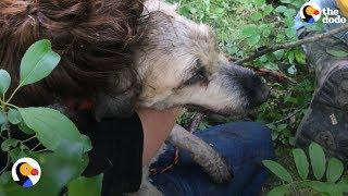 Dog Missing for 30 Hours Rescued From Small Hole   The Dodo
