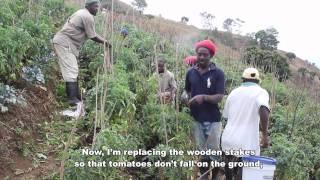 Haiti: Haitian Agricultural Workers