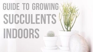 Guide To Growing Succulents Indoors