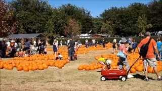 Bates Nut Farm in HD - San Diego Pumpkin Patch