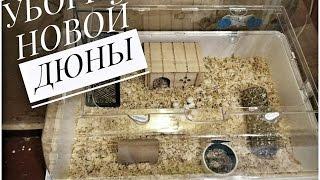 Уборка новой ДЮНЫ // Клетки моего хомяка // Мой джунгарский хомяк