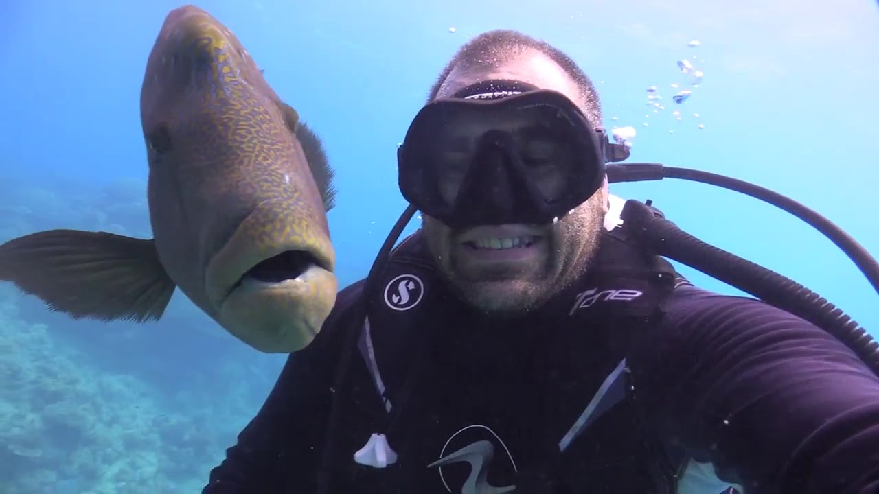 video Great Barrier Reef 3 Days Live-aboard