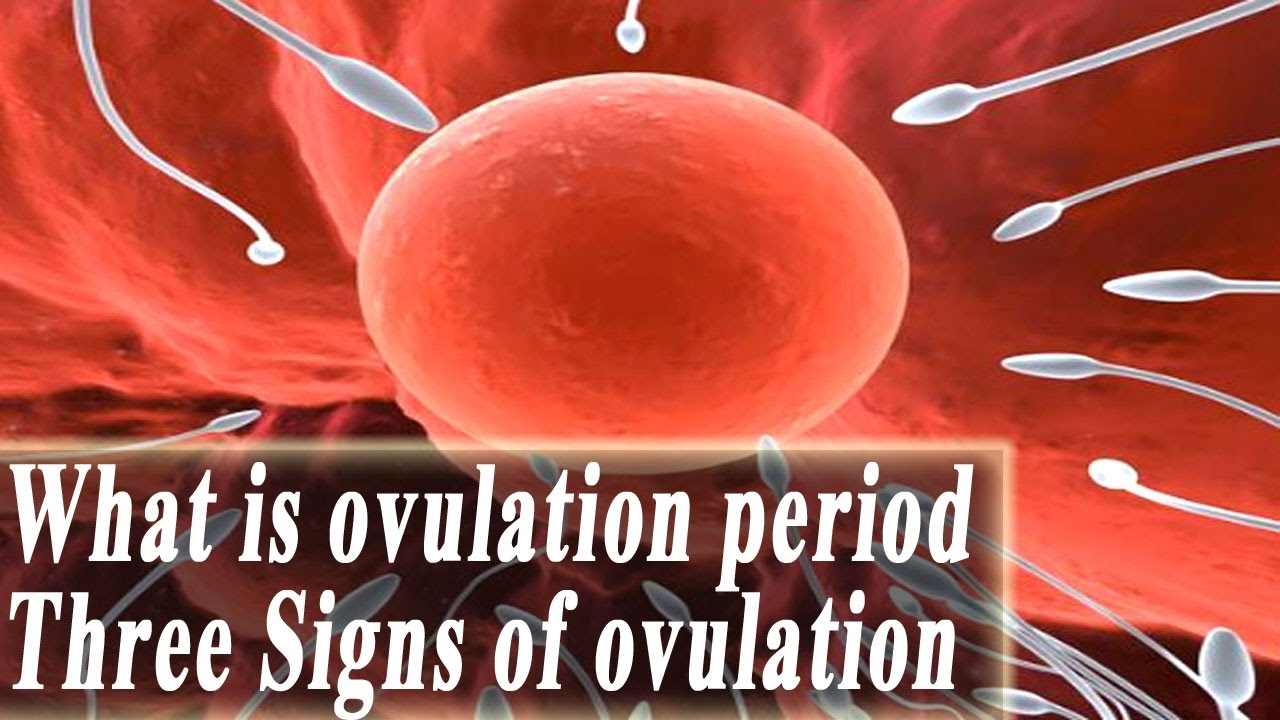 how to work out ovulation