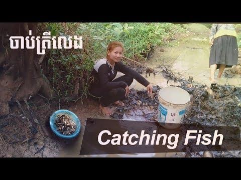 catching fish | Cambodian Traditional Fishing | Khmer Girls fishing