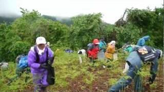 Repeat youtube video 「中山観光わらび園 2011」シゲ爺のわらび採り(2011.5.22)