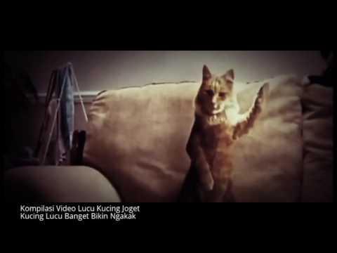 Video Kucing Joget Mp4 Ayam Joged Doovi Ayam Joged Doovi