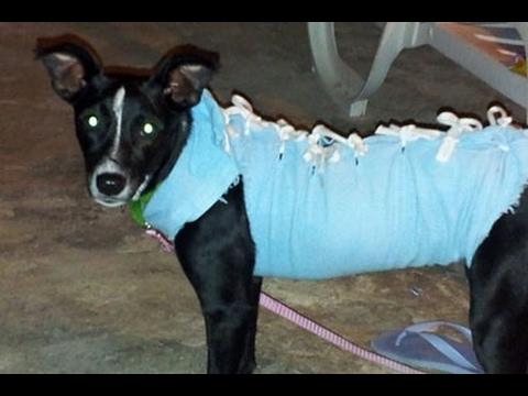 Roupa cirurgica artesanal para gatos e cachorros