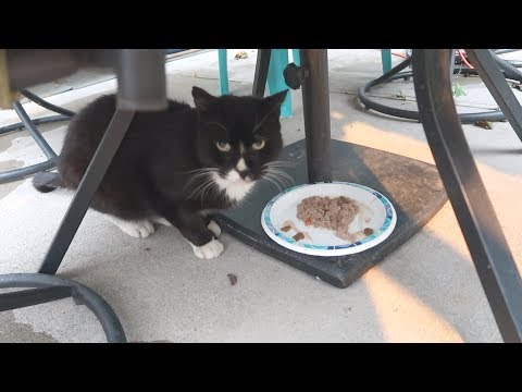 Boo Year 2 # 28 - Simba In The Cat Stroller, Hydrox Under The Patio Table - Cat Reality Show