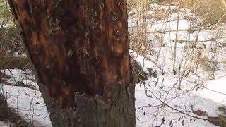 Необходимость обработки древесины сруба деревянного дома защитными материалами