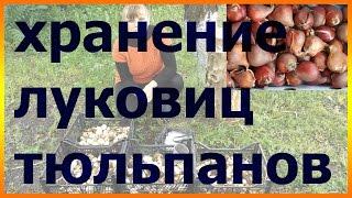Как хранить луковицы тюльпанов. Тюльпаны уход выращивание посадка вредители болезни.(Как хранить луковицы тюльпанов. Тюльпаны уход выращивание посадка вредители болезни. Подписывайтесь на..., 2016-05-26T21:12:25.000Z)