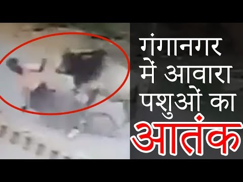 Angry ANIMAL Attacking Bike Rider | CCTV Video Ganganagar News