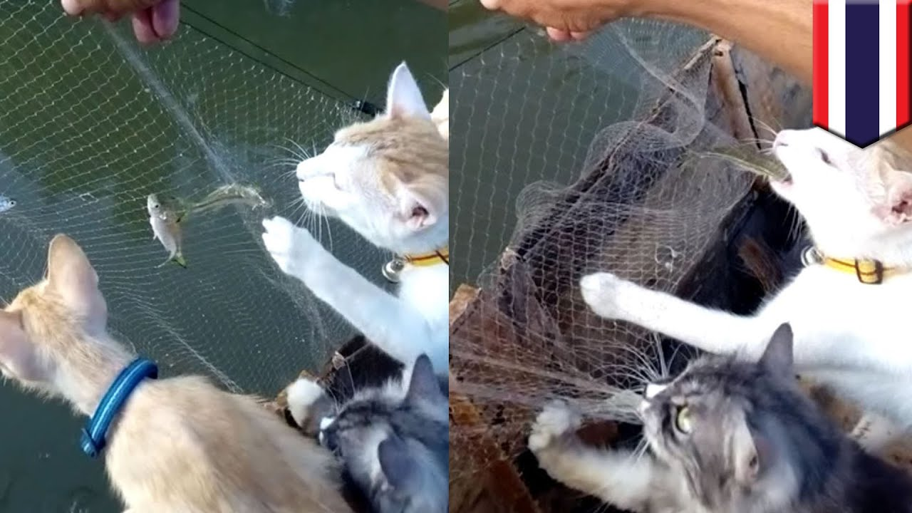 purrrfect catch cute cats go on fishing trip with a man