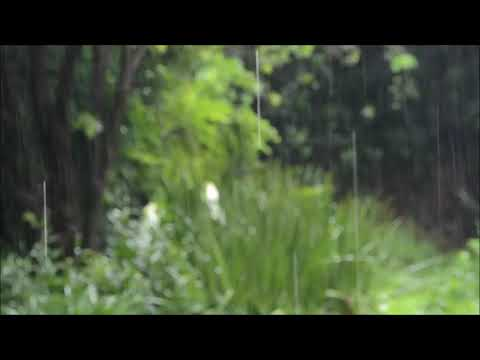 Beautiful Nature relaxing video | Best Relaxing and Meditation VIdeo