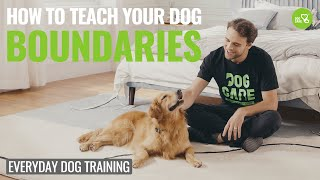 How to Teach your Dog Boundaries! Episode 3 #dogcare​ #dogtraining​ #trainingcollar