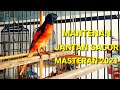 Burung Mantenan Jantan Gacor Ngerol Untuk Masteran  Mp3 - Mp4 Download