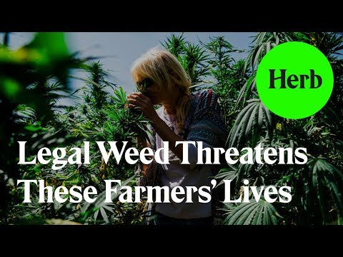 Legal Weed Threatens These Farmers' Lives- Trailblazers