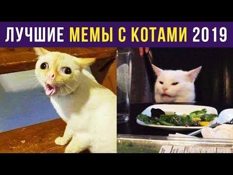 Приколы с котами. ЛУЧШЕЕ ЗА 2019 ГОД | Мемозг