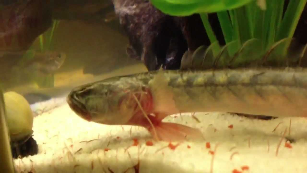 how to make fish frenzy liquid