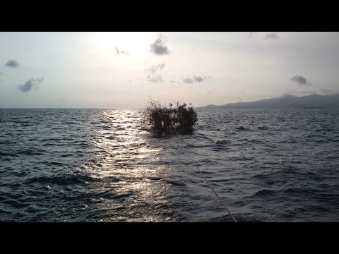 Rumpon / Fishing Aggregating Device (FAD) 2014