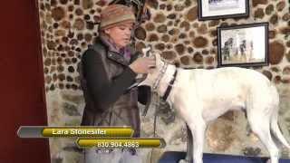 How To Desensitizing a Dog - San Antonio Dog Trainer Tells How