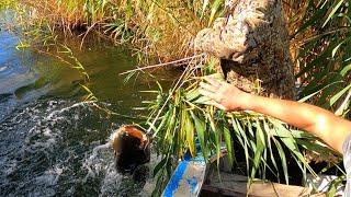 Рыбалка река Или низовья