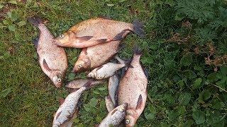 Рыбалка на леща 2018