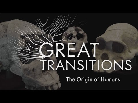 Great Transitions: The Origin of Humans — HHMI BioInteractive Video