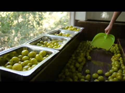 Bird Peck Organics - Amla Tea