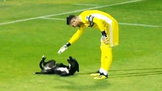 Самые смешные моменты с животными на футбольном поле