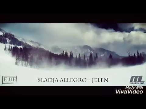 Allegro sladja Jelen