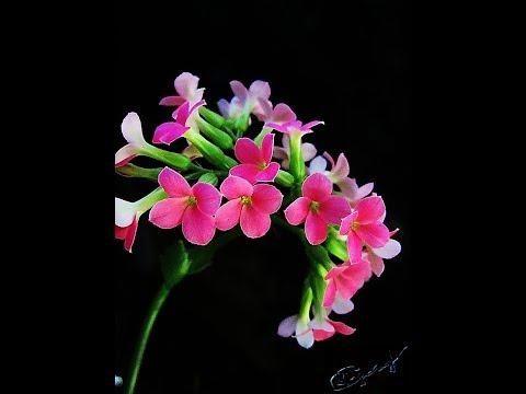 фото альбом домашних цветков
