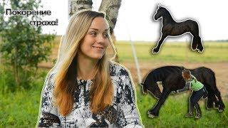 Wester Фризская лошадь. конный блог. Тренировка