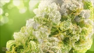 Ice Cube Smoke Some Weed (close to original Instrumental )