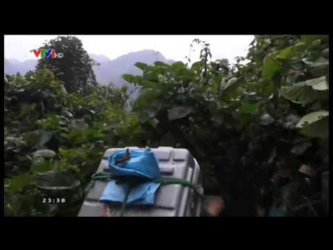 VTV kết nối   01 02 2015   Video đã phát trên   VTV VN