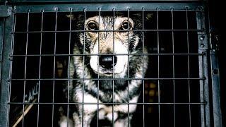 Tierarzt packt aus - 90% machen diesen fatalen Fehler, wenn ihr Haustier eingeschläfert wird!