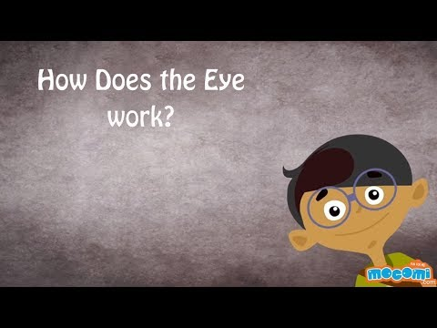 The Human Eye - How the Body Works | Kids Education by Mocomi Kids