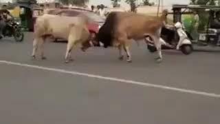 इन जानवरों का चालान कौन करेगा@प्रखर संवाद