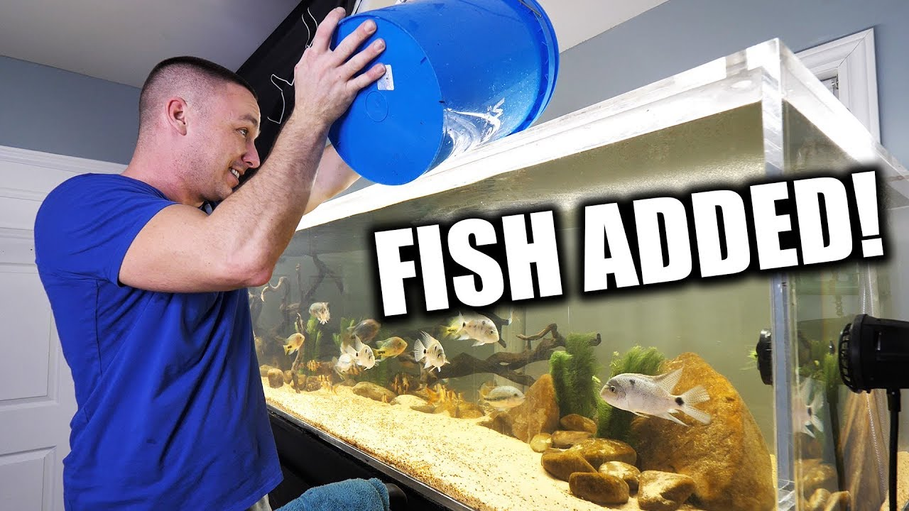 fish-added-to-the-big-aquarium