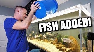 FISH ADDED TO THE BIG AQUARIUM!