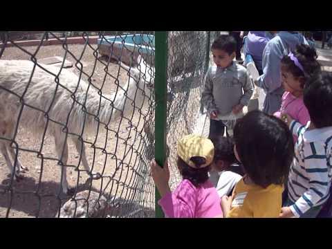 Zoo Agadir full of life 2015 - le zoo d'agadir est plein de vie 2015