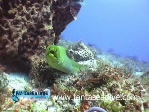 Animals of the Meso American Reef