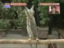 Как смеется сова؟ Смешное видео с совой хохотушкой