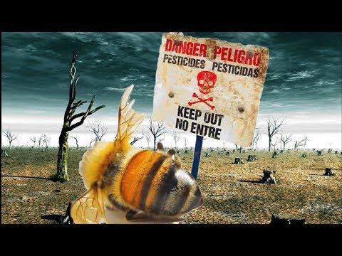 Вопрос: Почему говорят, что массовое вымирание пчёл принесёт голод?