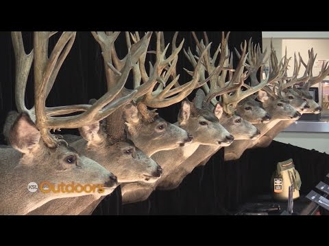 2017 International Sportsmen's Expo Highlights