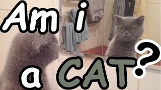 Crazy Animals  Reactions to mirror