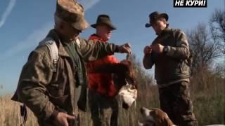 №2 Охота на фазана с пойнтером. Парная работа пойнтеров . 2018