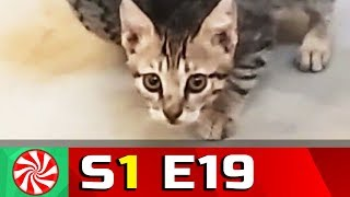 Funny Cat Videos for Kids | S1-EP19 | Cat Walking || Capture Candy Kids TV