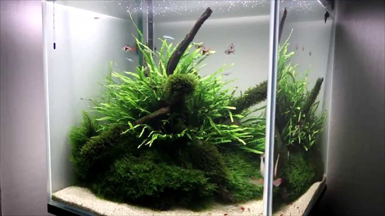 Cube 45 Aquascape #3 - YouTube